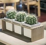 Plint 3 Skagerak Doniczki Na Kaktusy Pomysły Na Zakupy